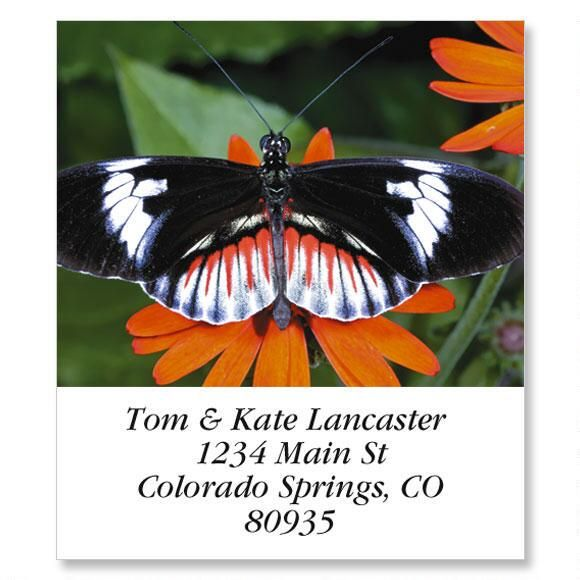 Longwing Butterfly Select Return Address Labels