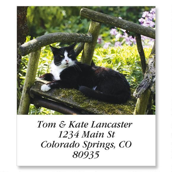 Black & White Cat in Chair Select Return Address Labels