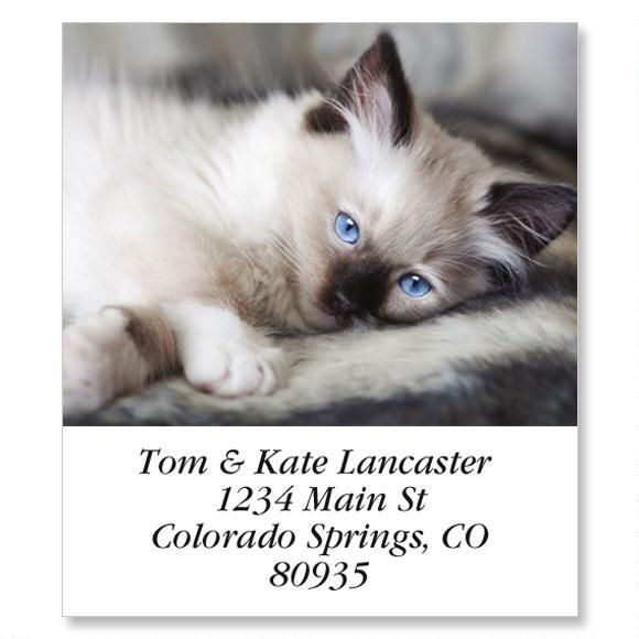 Old Blue Eyes Select Return Address Labels