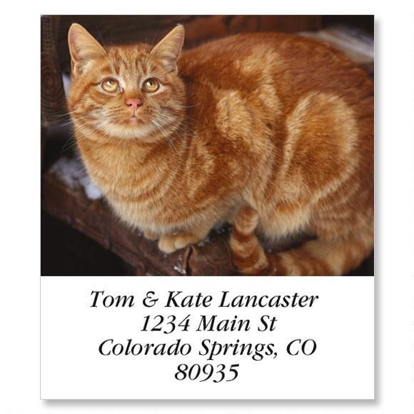 Tabby Cat Select Address Labels