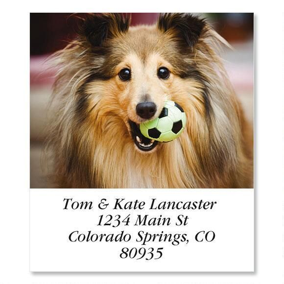 Shetland  Select Address Labels