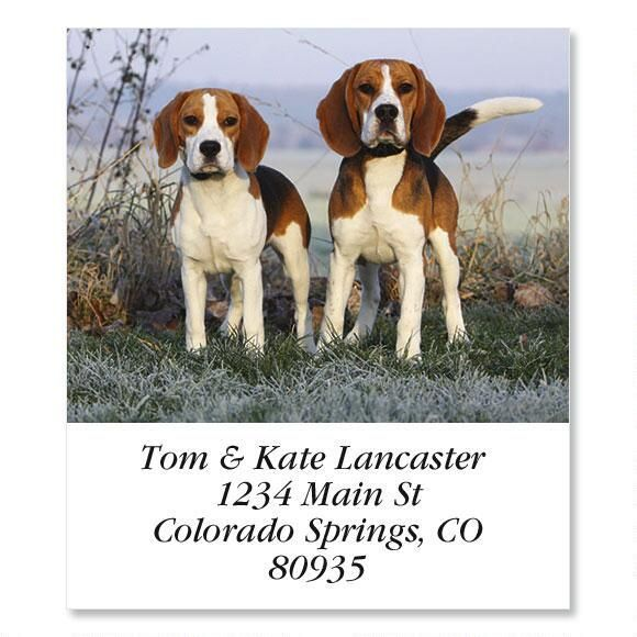 Beagle Beauties  Select Return Address Labels