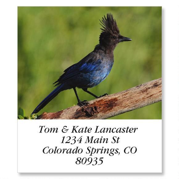 Stellers Jay  Select Address Labels