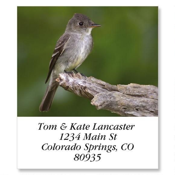 Eastern Wood Pewee  Select Return Address Labels