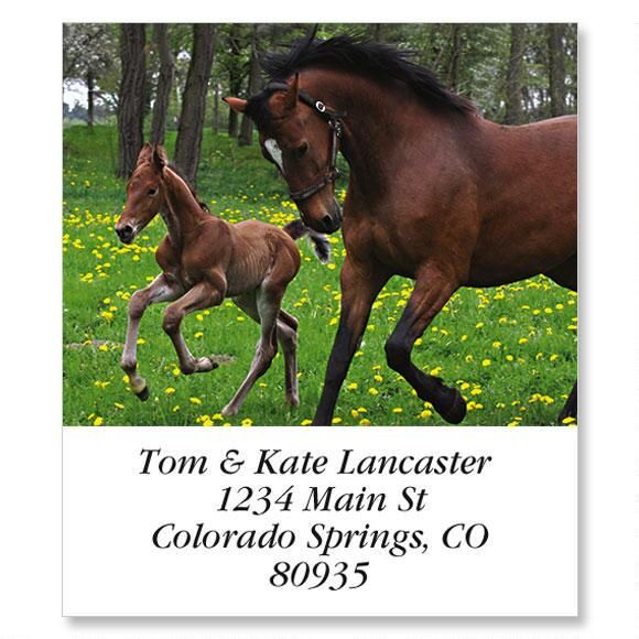 Horse Family Select Return Address Labels