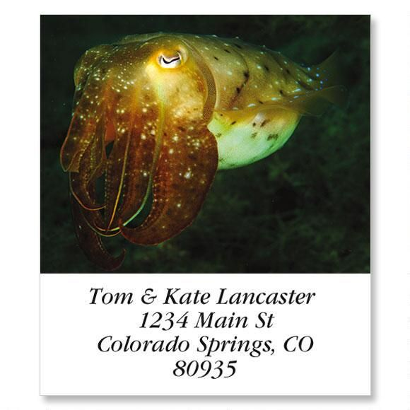 Cuttlefish Select Address Labels