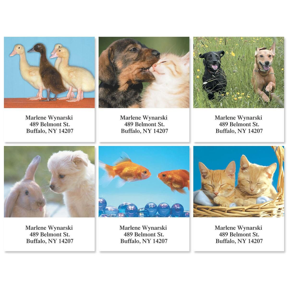 Animal Buddies Select Address Labels  (6 Designs)