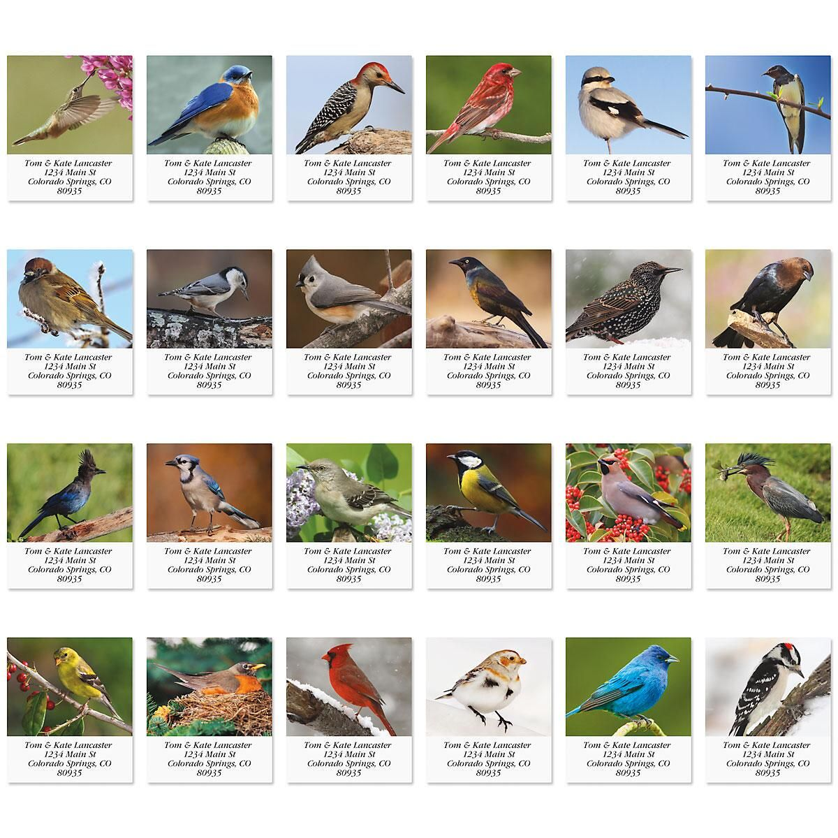 Birds of North America  Select Return Address Labels  (24 Designs)