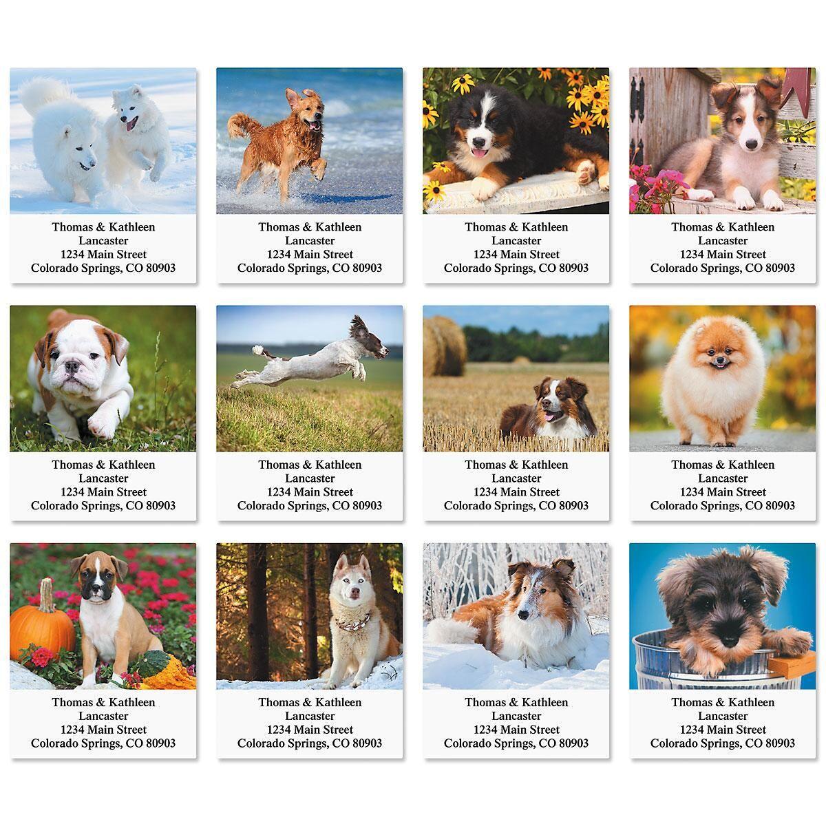 Doggone It! Select Return Address Labels  (12 Designs)