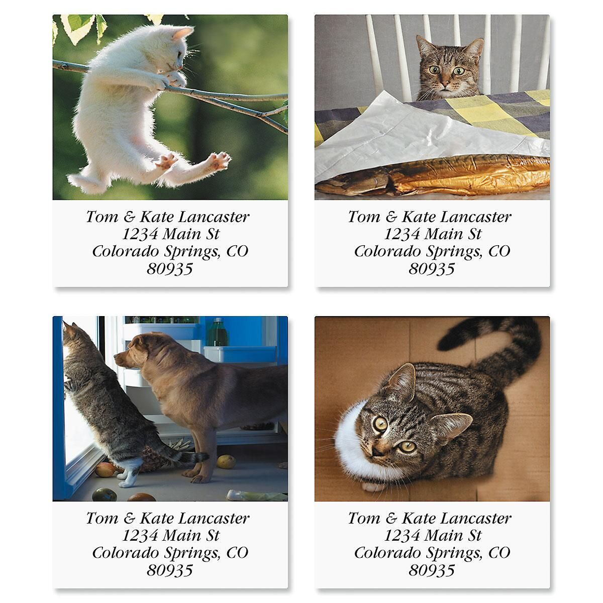 Catitude Select Return Address Labels  (4 Designs)
