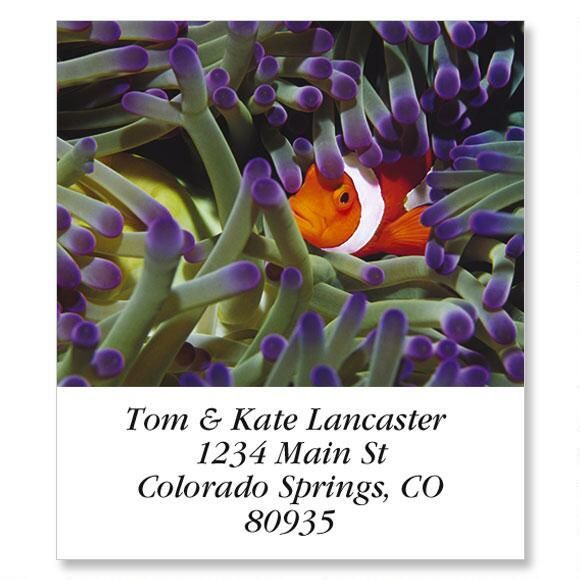 Clown Fish Select Return Address Labels