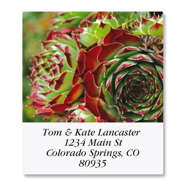 Cactus Flower Select Return Address Labels  (12 Designs)