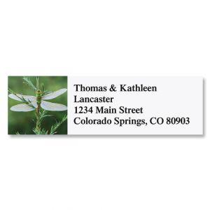 Darner Dragonfly Address Labels