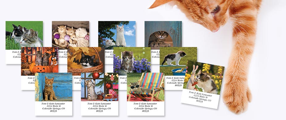 Shop Cats Labels at Colorful Images