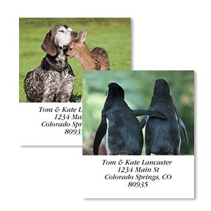 Shop Photo Labels at Colorful Images